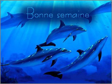 http://a4.idata.over-blog.com/400x296/3/02/33/31/divers/DIVERS3/bonne-semaine-dauphins.jpg
